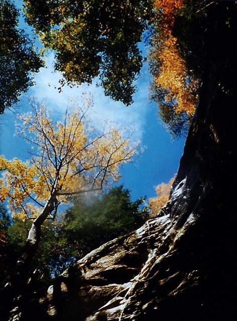 Anglin Falls