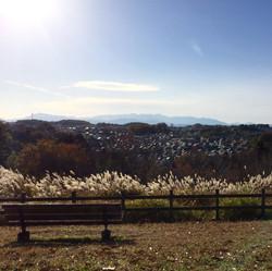 小山田緑地から見える前景