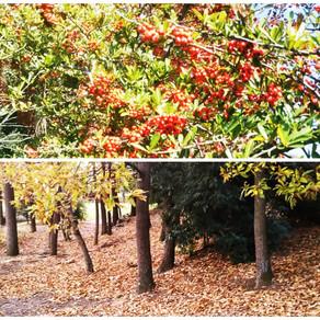 山王林公園の晩秋の風景