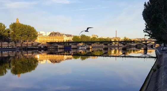 Seagull by the Pont des Arts