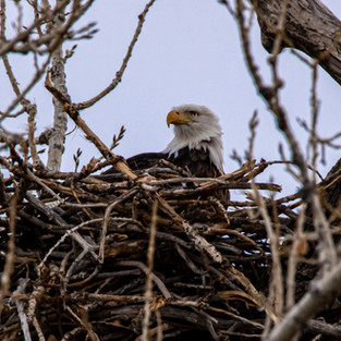 Dave Abberger: Don't Die in Your Nest