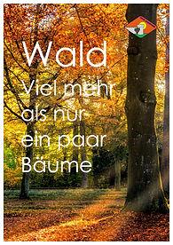P03 Vorderseite Wald neu_compressed.jpg