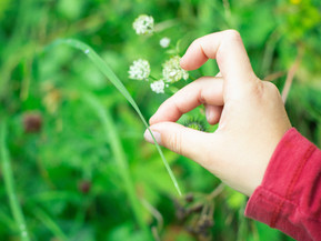 Let your kids become nature detectives -  apps, and facts