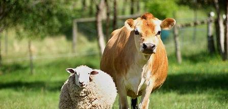 sacrewell farm.jpg