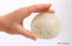 sand dollar, Ortho-Bionomy Genève methode et formation