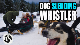 First time Dog Sledding in Whistler, Canada.