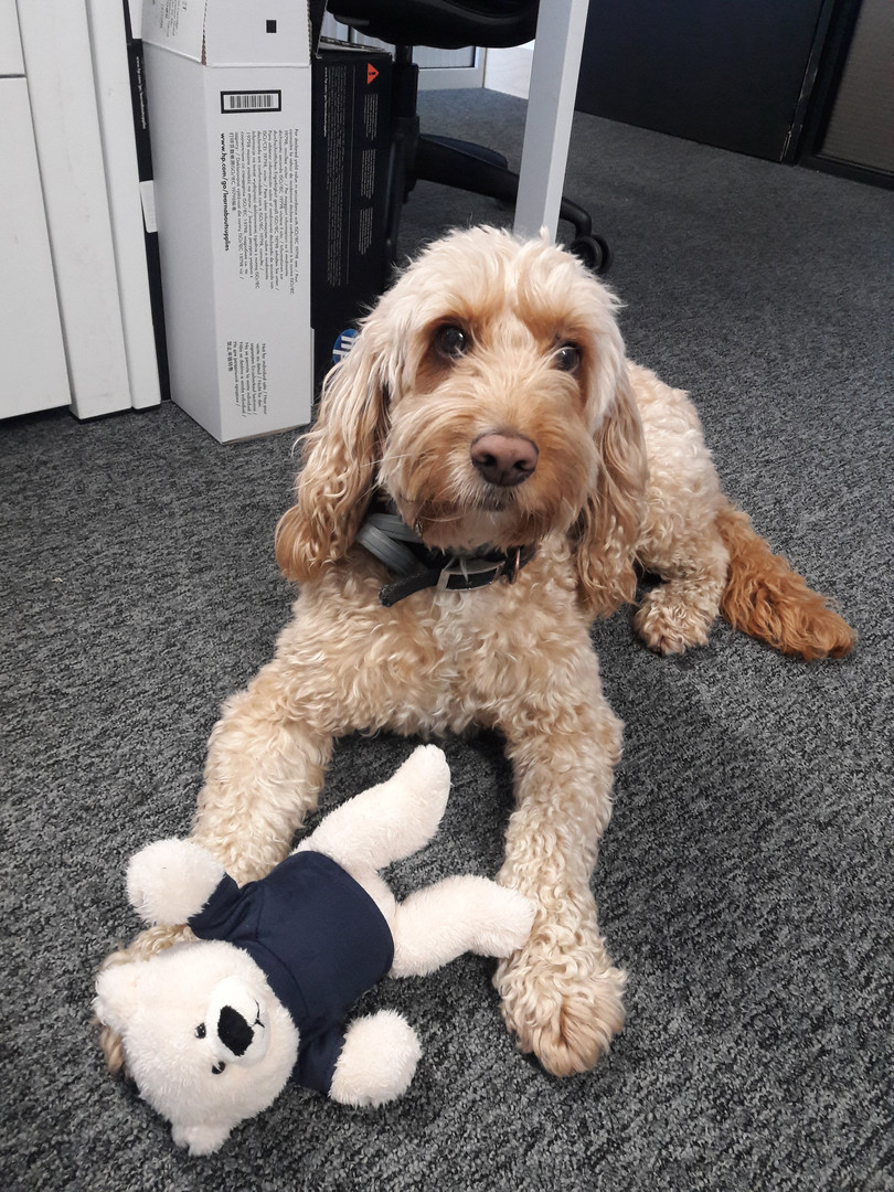 Meet Marley, Smile Train UK's office dog