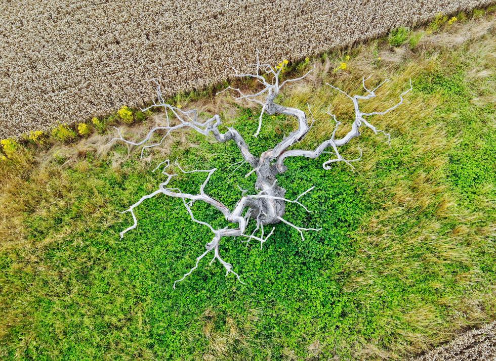 spiny tree aerial.jpg