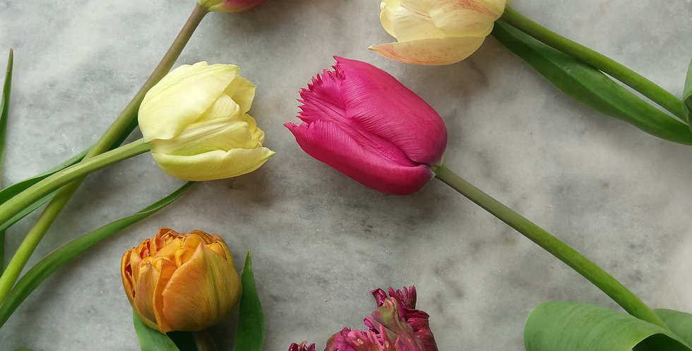 Mix Speciality Tulips