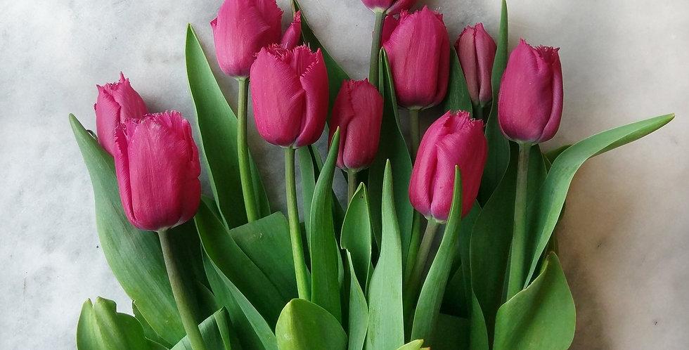 Tulip Deep Pink Fringed