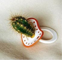 sucette-cactus.1184060504.jpg