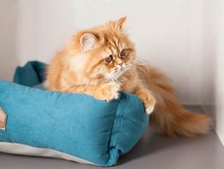 Новости для котиков
