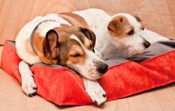 Лежак подушка