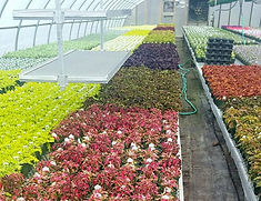 greenhouse%202021_edited.jpg