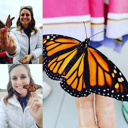 butterflies-at-school