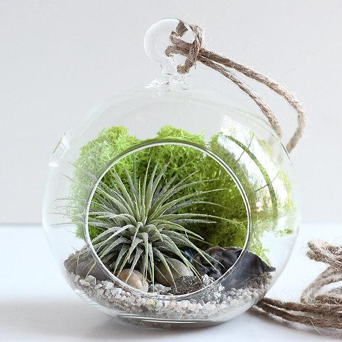 Succulent Hanging Terrarium