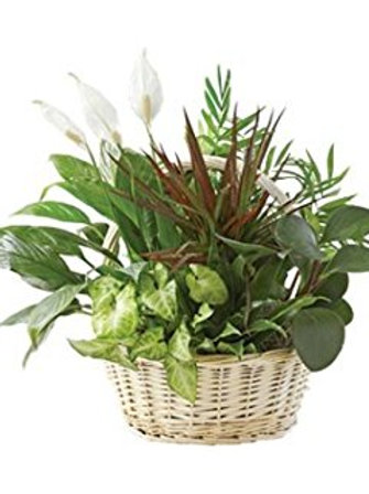 Heaven's Garden Plant Basket