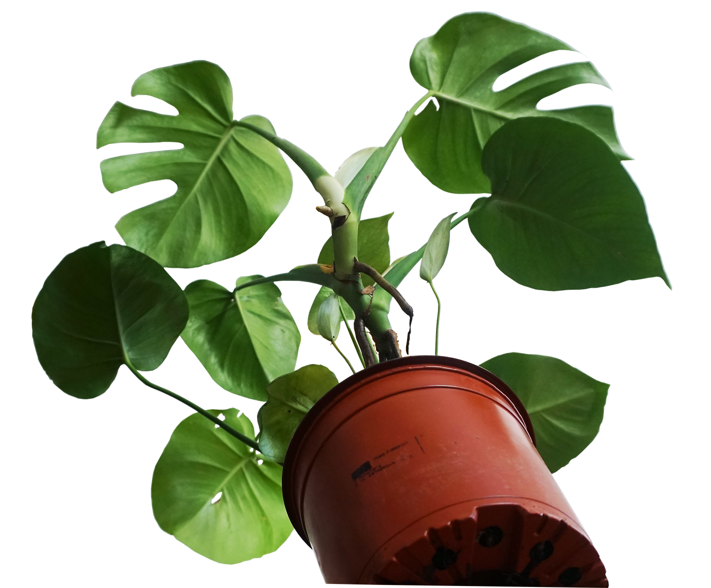 plant from below.png