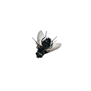 dead fly.png
