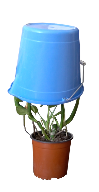 plant bucket.png
