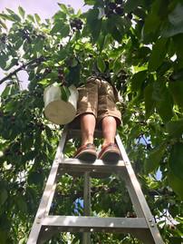 feet in orchard.jpg