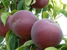 sweet dreams peach.jpg