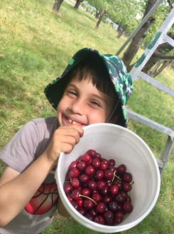 boy with cherries in our orchard.jpg