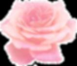pinkr-rose-1.png