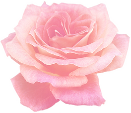 pinkr-rose-1.png