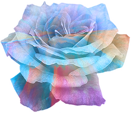 color-rose-2.png