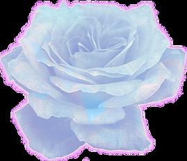 rose-parrish2.png
