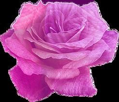 yarn-rose.png