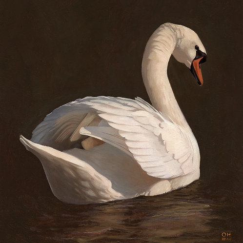 Swan - Limited Edition print