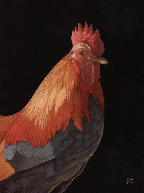 Cockerel - Limited Edition print