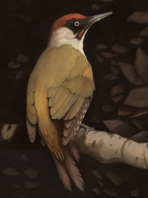 Green Woodpecker - Limited Edition print