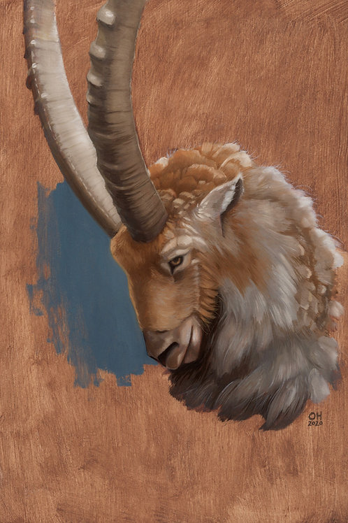 Pyrenean Ibex - Limited Edition print