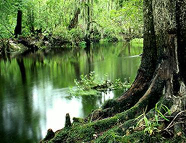 lumber river.jpg