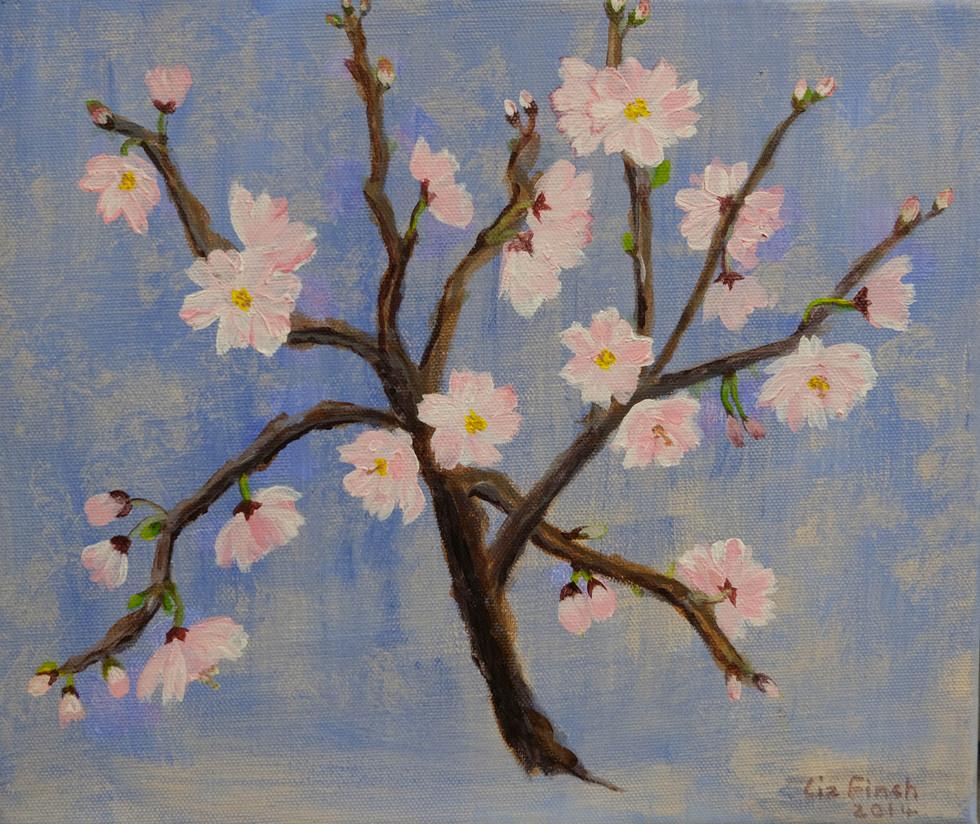 Almond Blossom  by Liz Finch