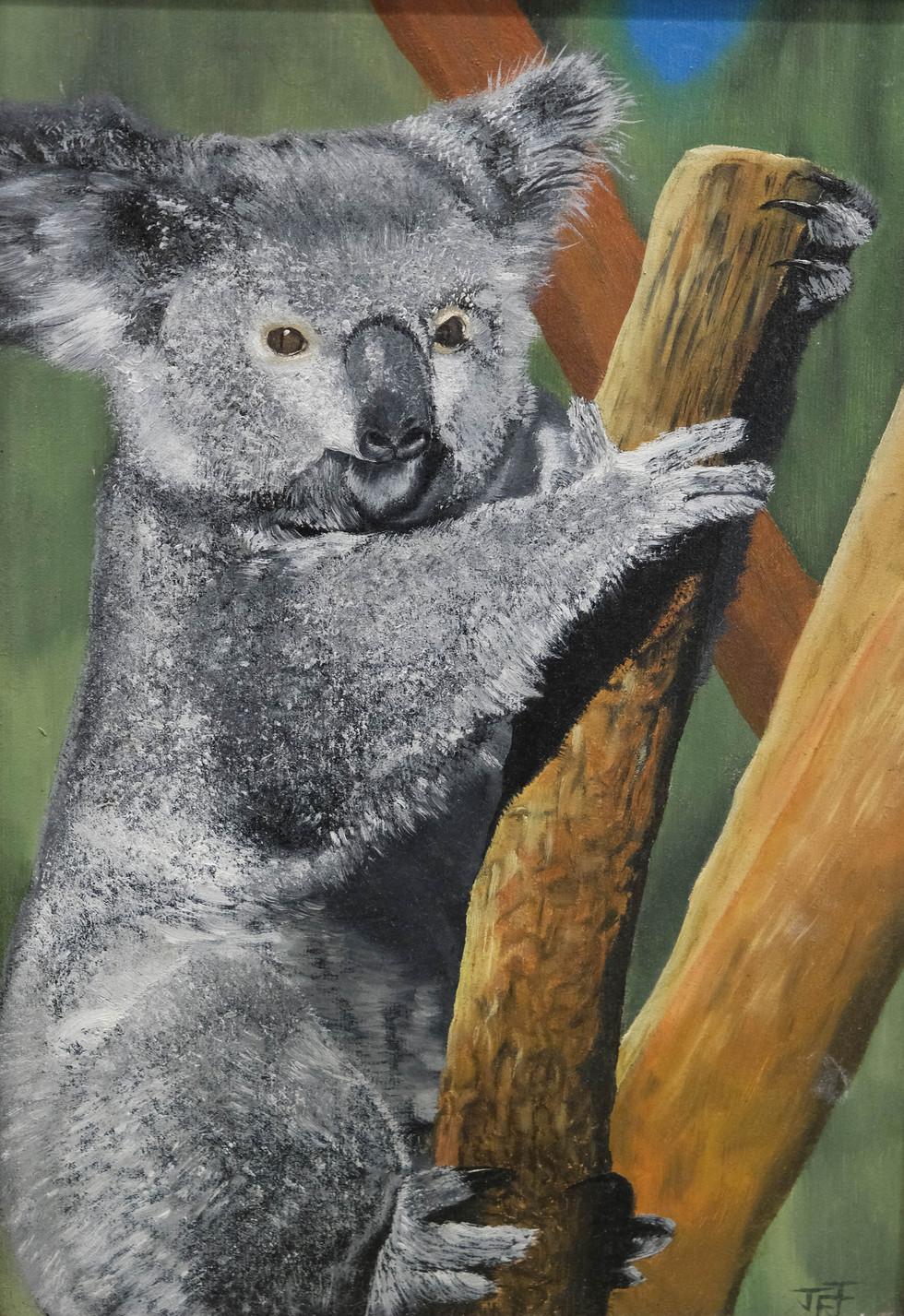 Koala  by John Jones