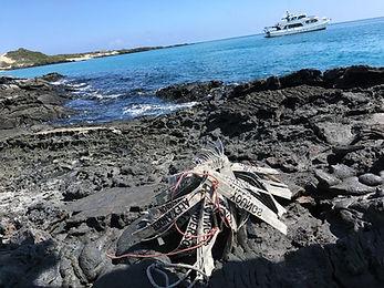 Mates in the Galapagos.jpg