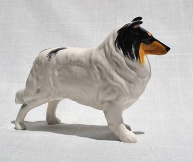 White Collie - Tricolor Head