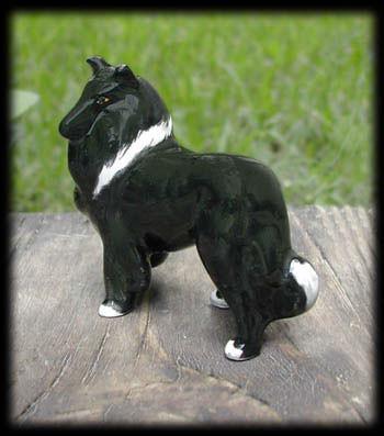 Black Bicolor Sheltie