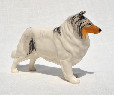 White Collie - Blue Merle Head