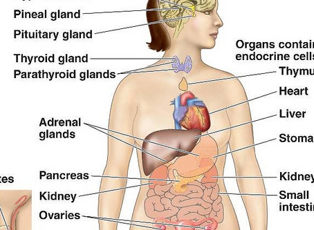 Hormone Glands!  Otherwise known as the Chakra System