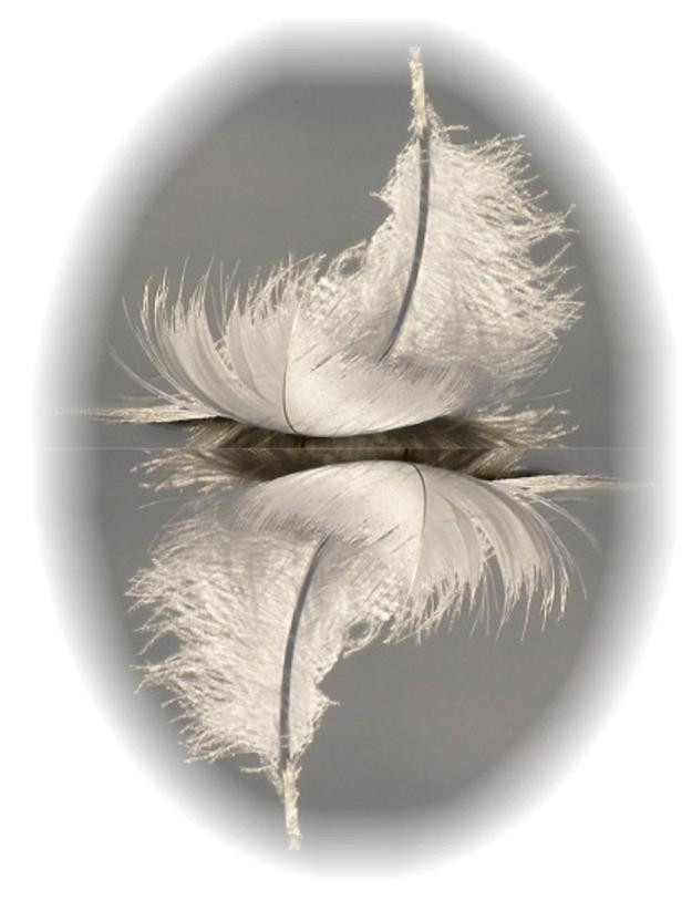 A feather may be a message from a loved one