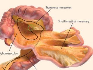 Krezka - nowy organ odkryty w ludzkim ciele (teraz jest ich już 79)