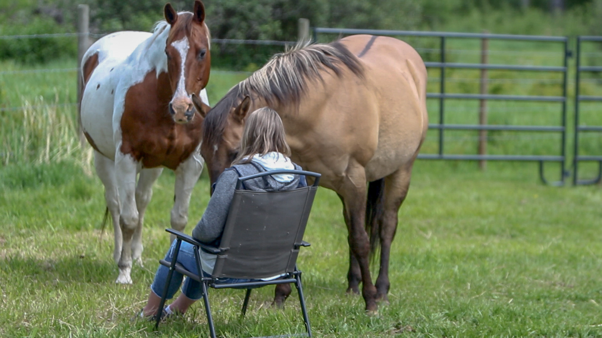 Reiki With The Horses