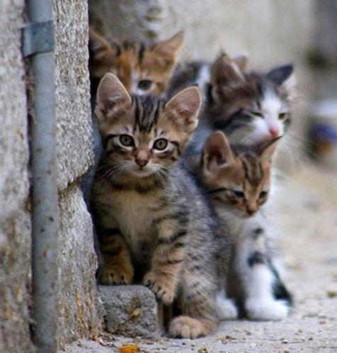 feral-kittens.jpg