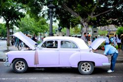 Lavender Taxi