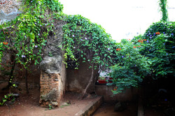 Old Wall and Vines: Calle Obispo